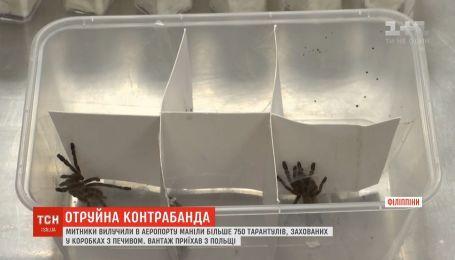 Сотни тарантулов пытались провезти контрабандой в Филиппины