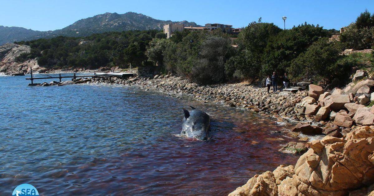 @ Facebook \ SEAME Sardinia