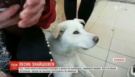 Собака, которую якобы избили и утопили работники школы, живой