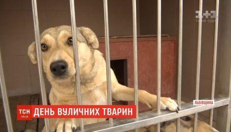 День бездомных животных: как грязный, голодный и травмированный может стать лучшим другом
