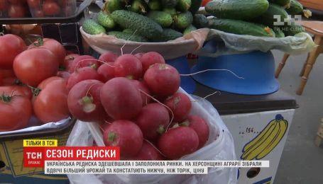 Первая весенняя редиска подешевела и заполонила рынки Украины