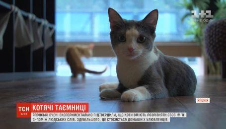 Японские ученые подтвердили, что коты умеют различать свое имя среди человеческих слов