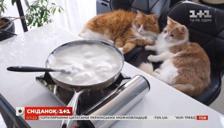 Японський фуд-блогер готує їжу разом з котиками