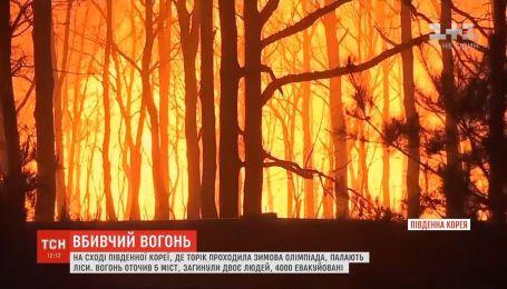 Масштабні лісові пожежі охопили схід Південної Кореї