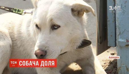 На Львовщине собака, которую вроде бы убили на глазах у учеников, оказался живым