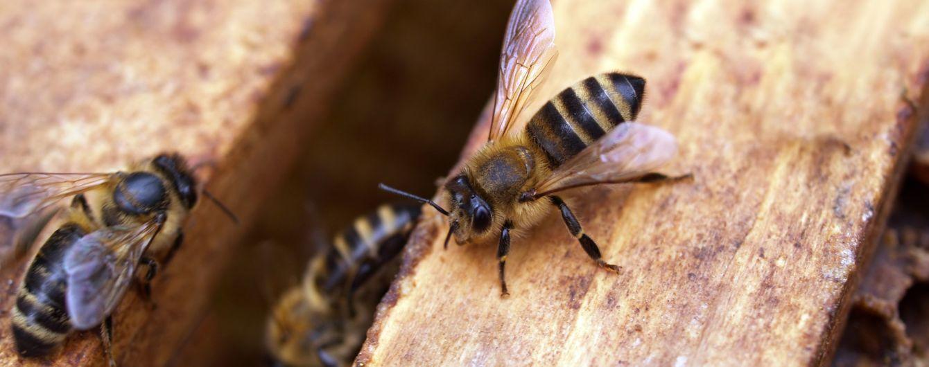 На Тайвані з ока жінки витягали чотирьох живих бджіл