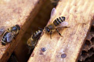 На Тайване из глаза женщины вытаскивали четырех живых пчел