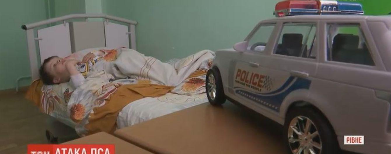 В Ровно питбуль напал на 4-летнего мальчика и порвал ему ногу