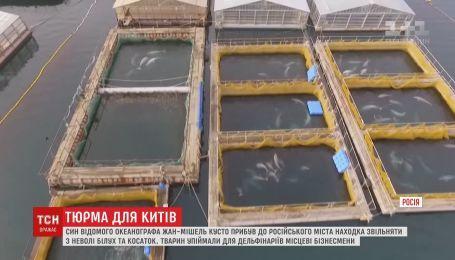 Син відомого океанографа Кусто взявся рятувати заґратованих в Росії китів