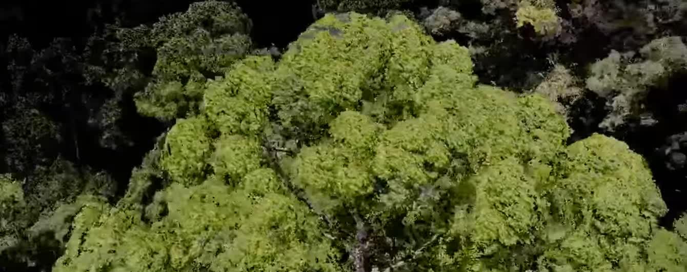 """""""Более 100 метров вверх"""". Ученые нашли самое высокое тропическое дерево в мире"""