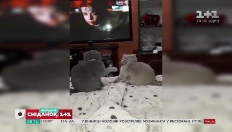 """Лучшие видео домашних любимцев от зрителей """"Сниданка"""""""