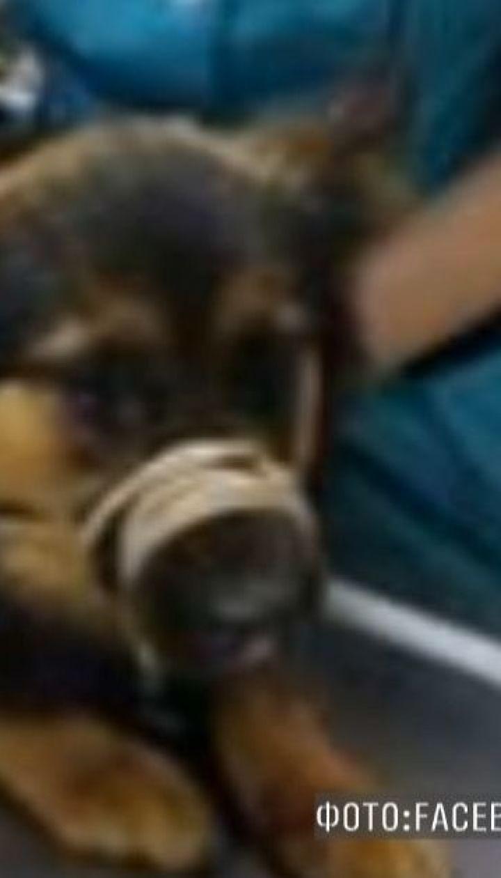 В Киеве на мосту Патона автомобиль такси сбил собаку и покинул ее на обочине