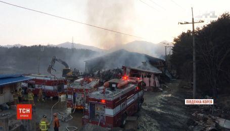 В Южной Корее оценивают ущерб, нанесенный крупнейшим в истории страны лесным пожаром