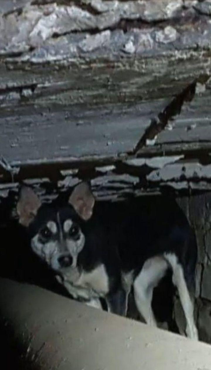 В прифронтовой Дружковке собака три года прожил в трубе теплотрассы