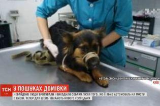 У Києві собака потрапив під таксі після того, як його викинув господар: Шелбі шукає родину