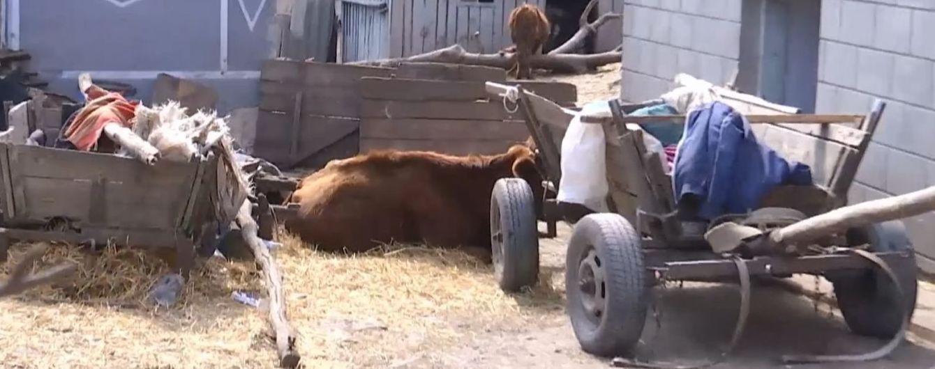 На Тернопільщині родина тримає в підвалі трупи корів: сморід розноситься селом