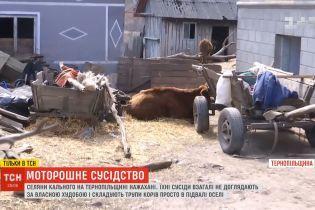 На Тернопольщине семья держит в подвале трупы коров: вонь разносится по всему селу