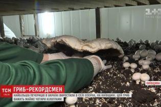На Киевщине вырастили гигантский шампиньон, который попал в книгу рекордов