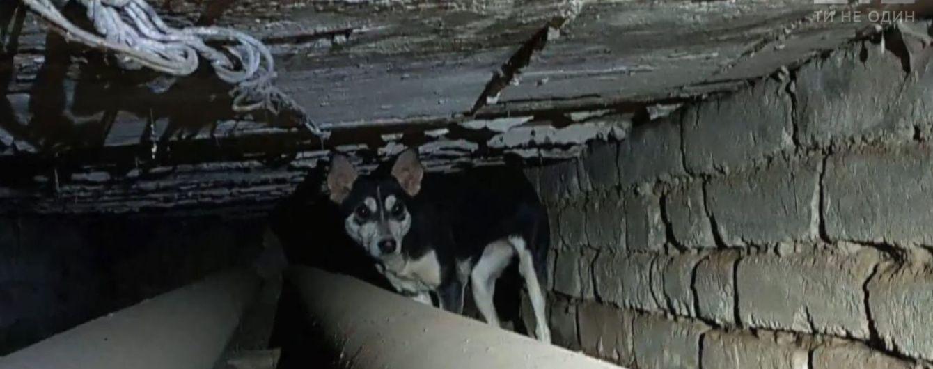 В Дружковке из теплотрассы вытащили собаку, которая три года, прожила под землей