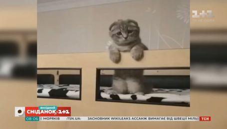 """Смешные домашние любимцы зрителей """"Сніданку з 1+1"""""""