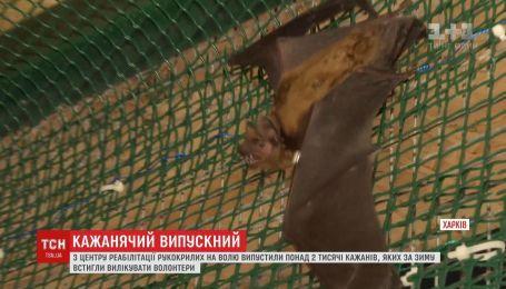Понад 2 тисячі кажанів врятували у харківському центрі реабілітації