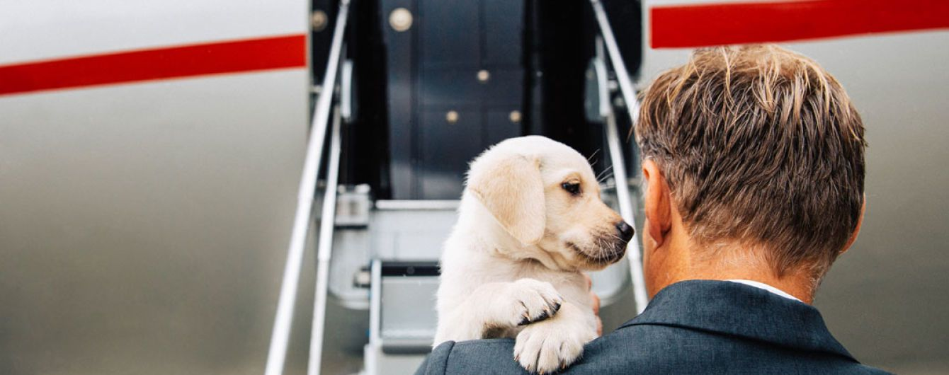 На Мальте отрыли авиарейсы для пассажиров с животными
