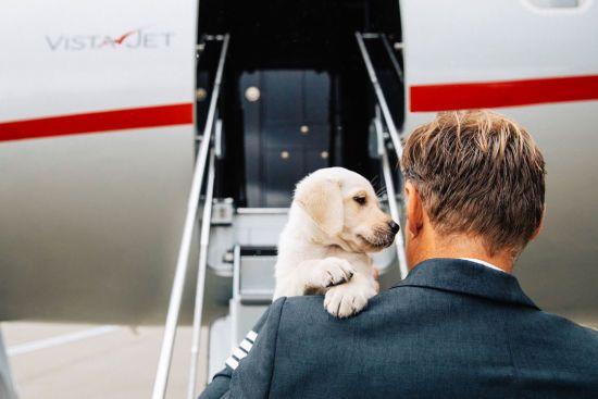 На Мальті відкрили авіарейси для пасажирів з тваринами