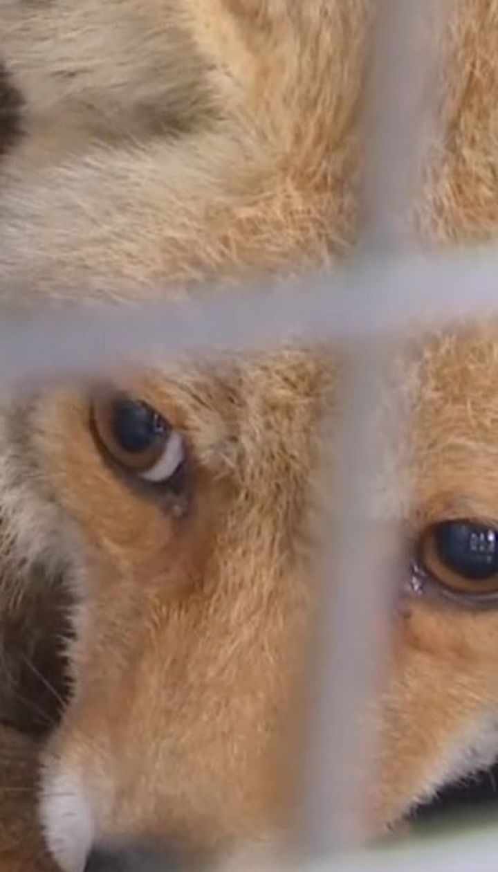 Зі звіринця у Секторі Гази евакуювали 47 хворих та голодних тварин