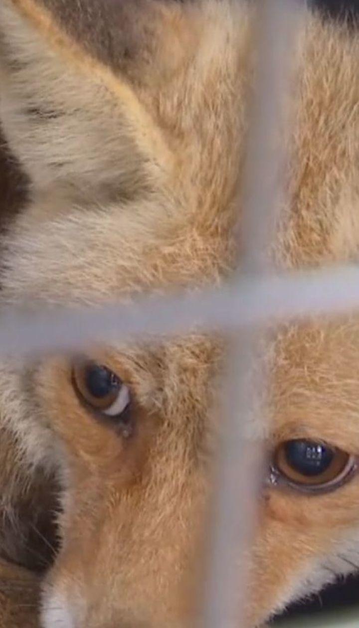 Со зверинца в Секторе Газа эвакуировали 47 больных и голодных животных
