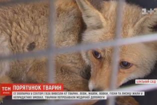 Из Сектора Газа вывезли зоопарк: животные голодали и гибли из-за плохих условий