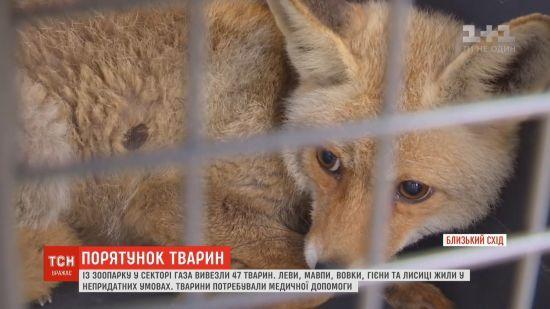 Із Сектора Гази вивезли зоопарк: тварини голодували та гинули через погані умови