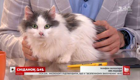 Кошка Ася ищет заботливых хозяев