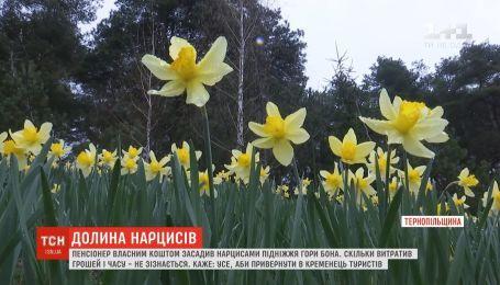 Пенсіонер висадив тисячі жовтих нарцисів на підніжжі гори на Тернопільщині