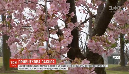За сезон цвітіння сакури Японія отримала прибутків на мільярди доларів