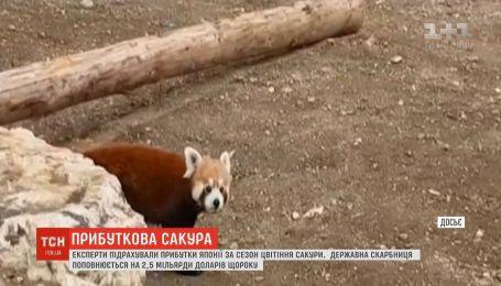 В зоопарке Брашова появилась первая в Румынии малая панда