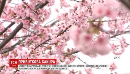 Державна скарбниця Японії щороку поповнюється на мільярди доларів через цвітіння сакури