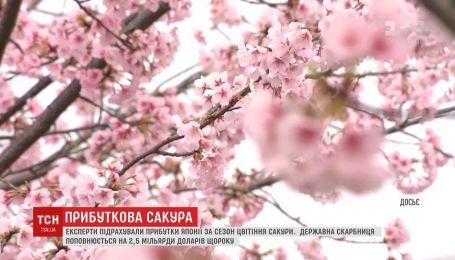 Государственная казна Японии ежегодно пополняется на миллиарды долларов из-за цветения сакуры