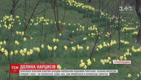 Пенсіонер власним коштом засадив нарцисами підніжжя гори Бона