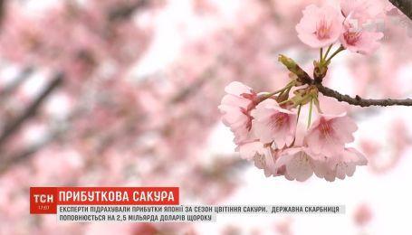 Експерти підрахували прибутки Японії за сезон цвітіння сакури