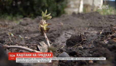 """Киянин на своєму городі вирощує каштани та передає столичному """"Зеленбуду"""""""
