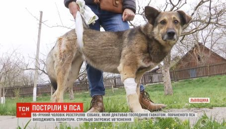 Чоловік з рушниці розстріляв пса, який дратував його гавкотом
