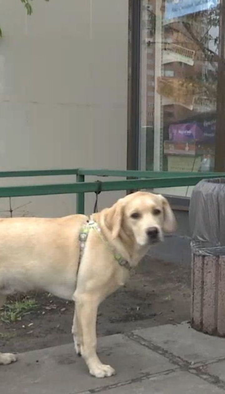 Де залишають собак українці, коли йдуть за покупками в супермаркет