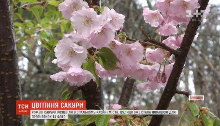 З приходом тепла у Вінниці зацвіли рожеві сакури