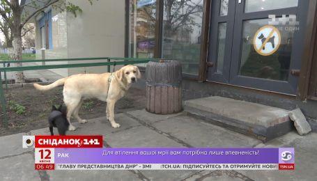 Где оставляют собак украинцы, когда идут за покупками в супермаркет