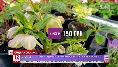 Скільки коштують багаторічні рослини для квітника - Зелена ділянка