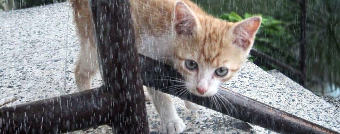 Погода на 3 мая: дожди не покидают Украину