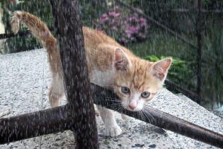 Погода на суботу: майже у всій Україні тримається дощова погода