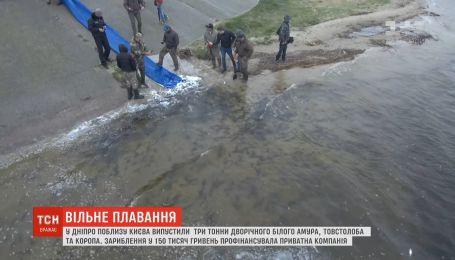 3 тонни риби випустили у Дніпро поблизу Києва