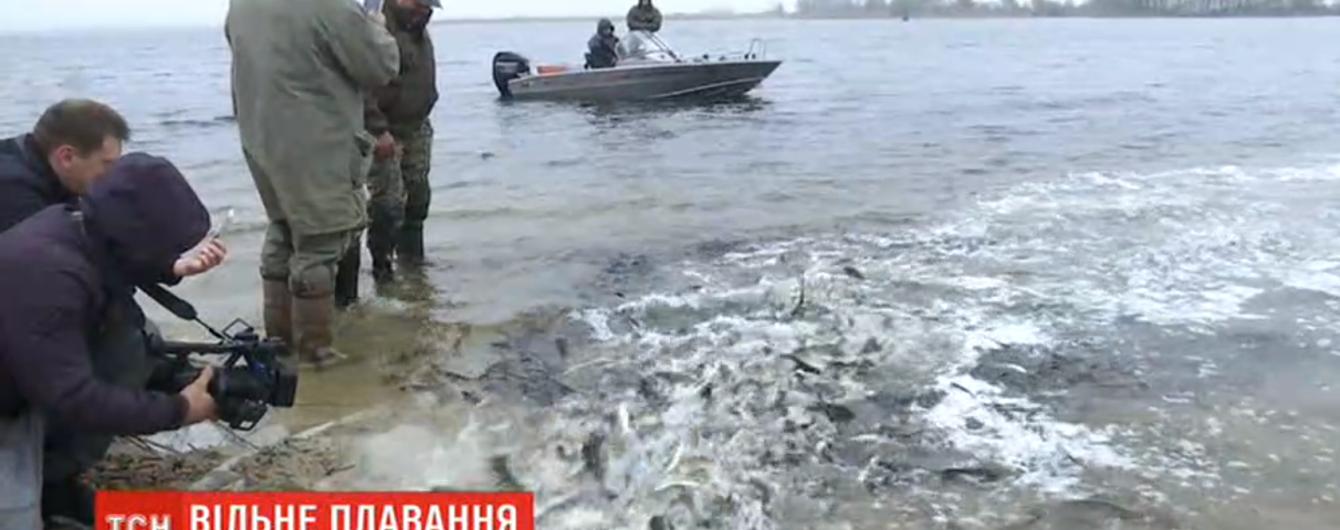 В Днепр запустили три тонны рыбы. Оберегать ее от браконьеров будет рибоохранный патруль
