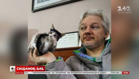 Посольский кіт: як журналісти та підписники соціальних мереж шукали пухнастика Джуліана Ассанжа